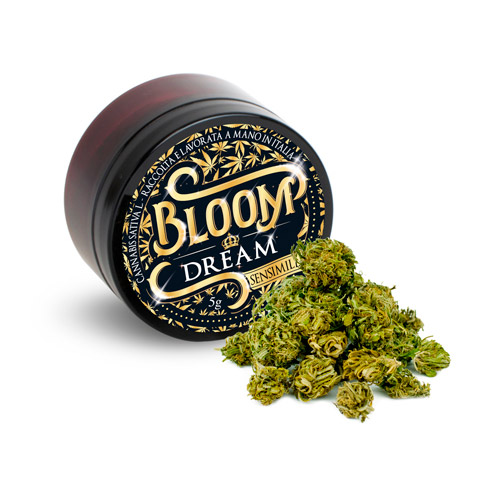 dream bloom