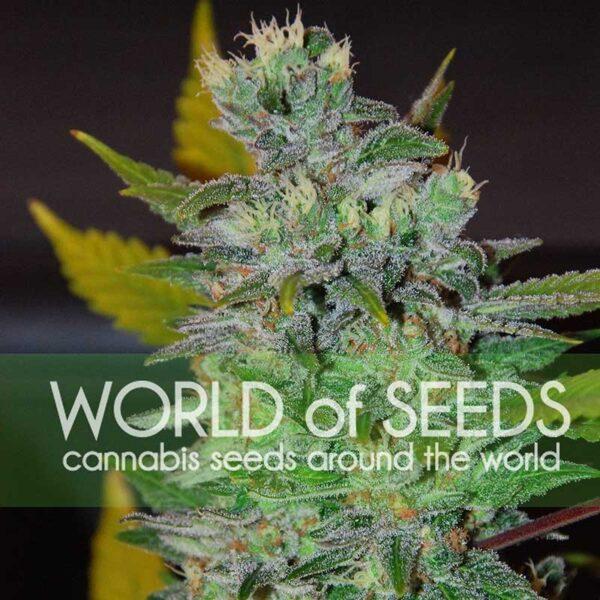 Space fem World of Seeds