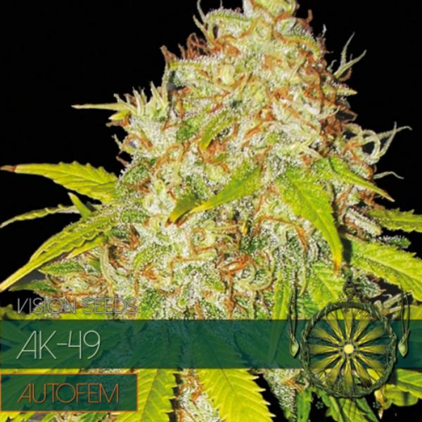 Ak 49 auto Vision Seeds