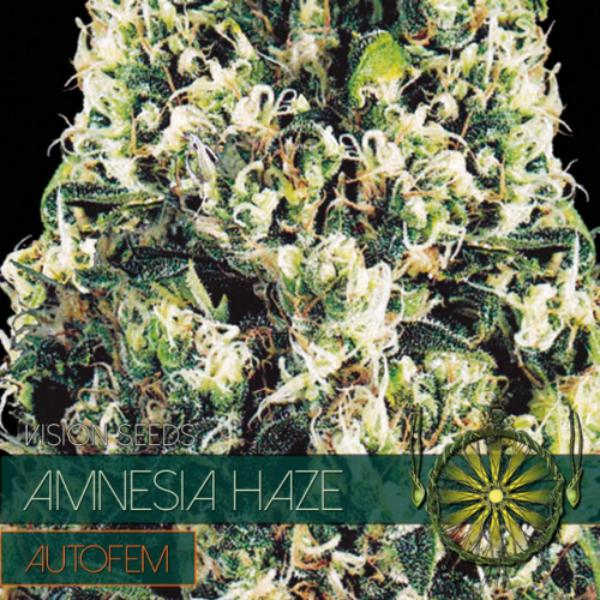 Amnesia Haze auto Vision Seeds