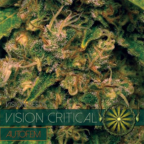 Critical auto Vision Seeds