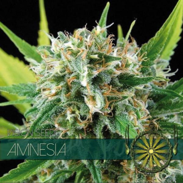 Amnesia fem Vision Seeds