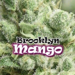 BrooklYn Mango fem Dr Underground