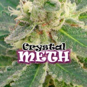 Crystal Meth fem Dr Underground