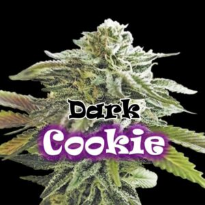 Dark Cookie fem Dr Underground