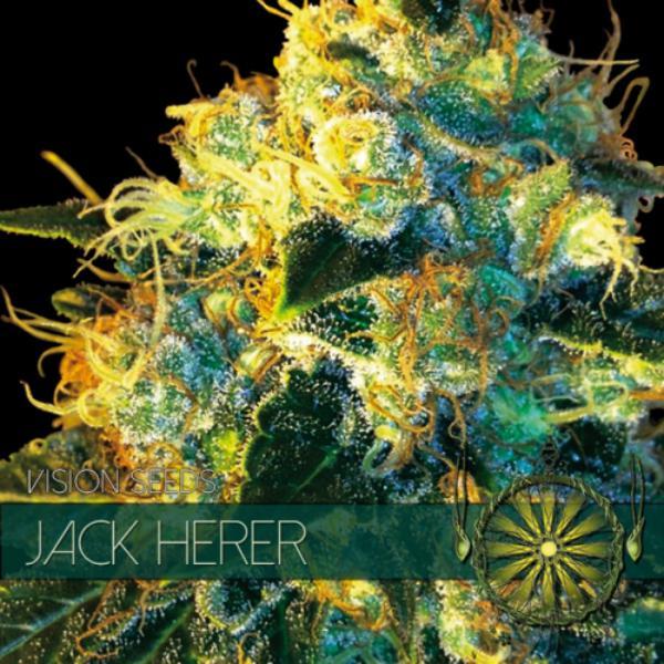 Jack Herer fem Vision Seeds