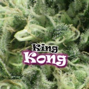 King Kong fem Dr Underground