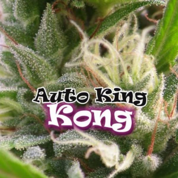 King Kong auto Dr Underground