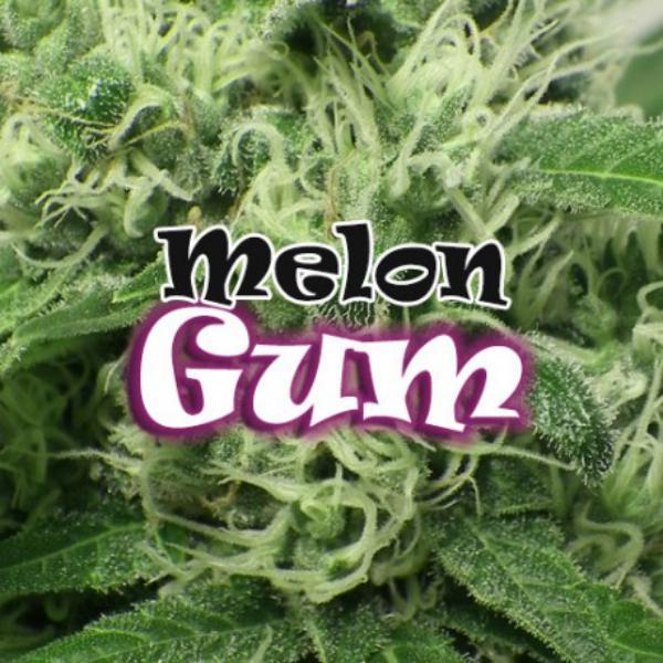 Melon Gum fem Dr Underground