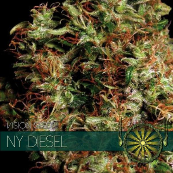 NY Diesel fem Vision Seeds