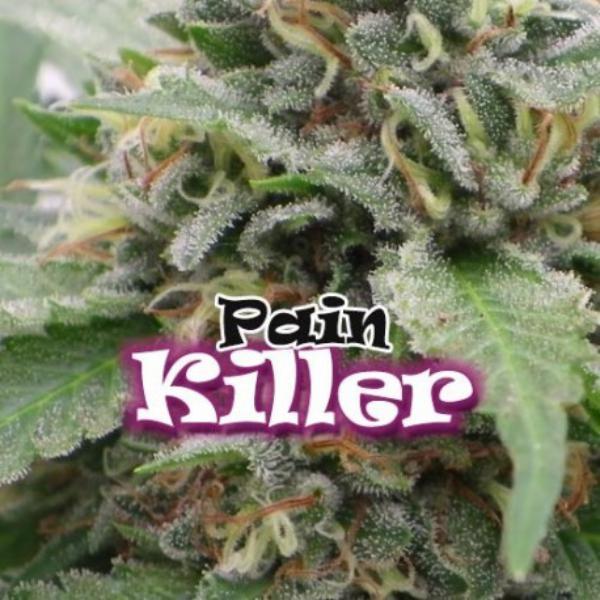Pain Killer fem Dr Underground