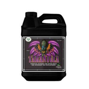 tarantula campo di canapa