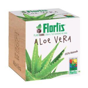 FLORTIS - PLANTACUBE ALOE VERA