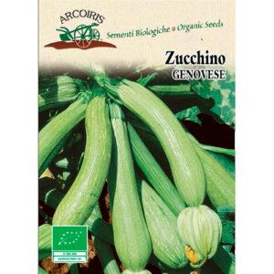 zucchino genovese arcoiris