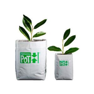 Pandora Pot