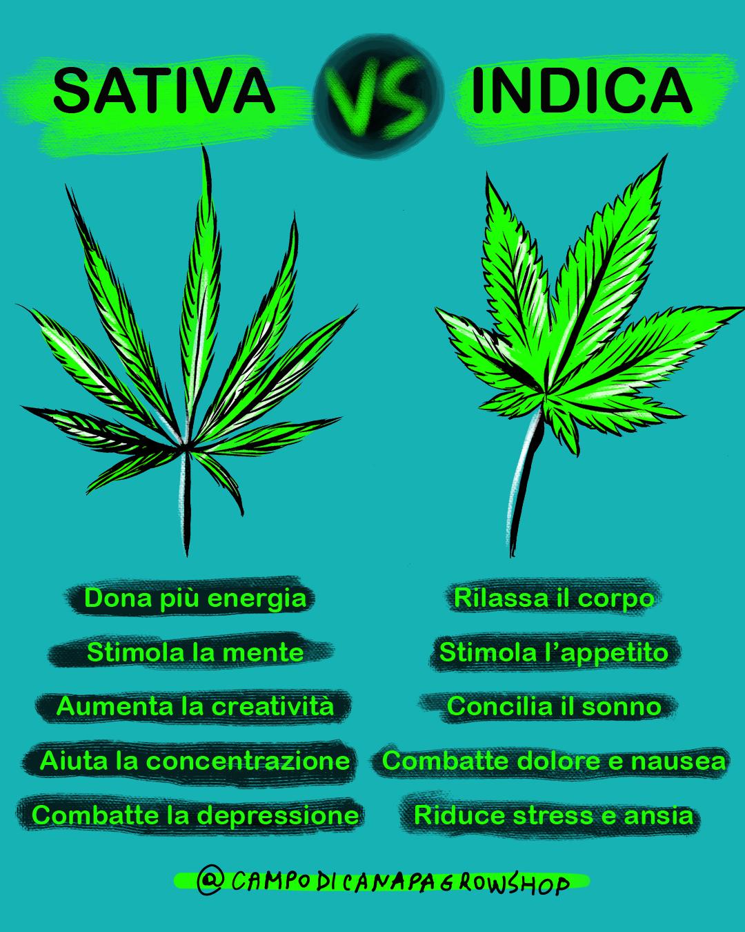 Indica Sativa differenze